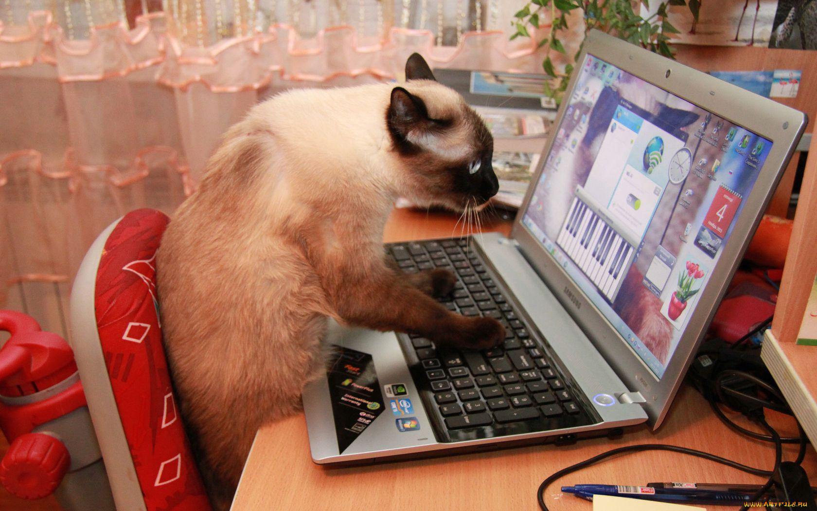 вас смешные животные за компьютером большие